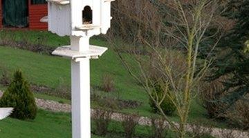 Wooden posts work well holding the purple martin bird house.