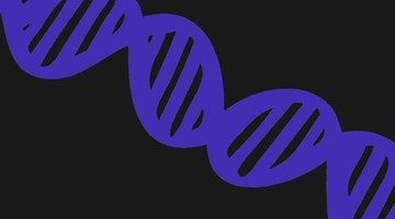 Instead of a stencil, you could paint the DNA strand by hand.