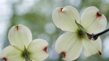 Add four petals to each leaf.