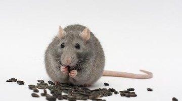Efectos del veneno para ratas en los humanos
