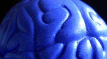 The brain is a sensitive organ.