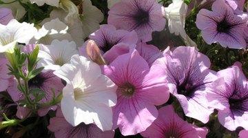 A simple floral arrangement will do.