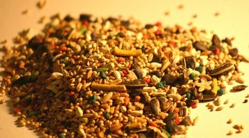 Scoop up wild bird seed and distribute it.