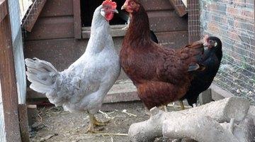 A chicken ark.