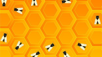 Honey bees learn from other bees how to pollinate flowers and collect honey.