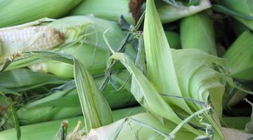 Corn and soy could yield oil for resins
