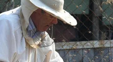 Local government may keep a list of beekeepers willing to remove bees.