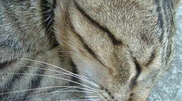 Colic in cats can become life-threatening.