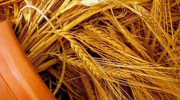 Barley straw is one of the oldest home remedies for controlling algae.