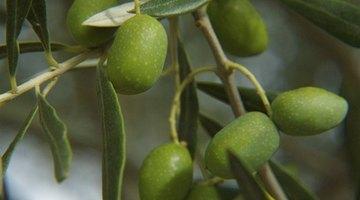 Omega-3 fatty acids promote brain growth.