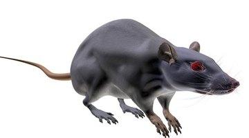 Mice hate peppermint oil.