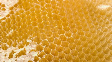 As with a honeycomb, the strength of balsa wood is increased by its cell structure.