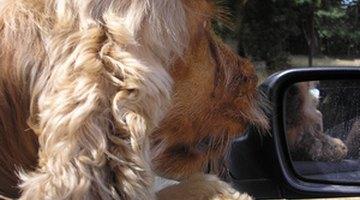 Dosis de Dramamine para perros