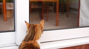 Cats have keen senses and are good hunters