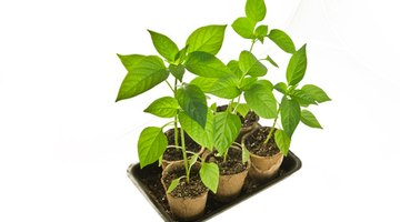 One Form of Potting Cells: Use Available Resources