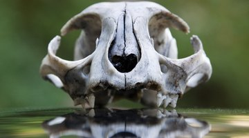 A skull can be a decoration with or without paint.