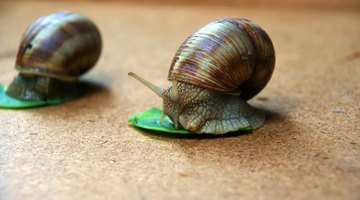 Snails can be helpful as they eat algae.