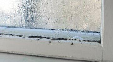 Mildew on a windowsill.