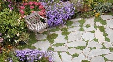 A garden and bench.