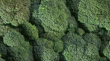 Broccoli contains vitamins A, C and K.