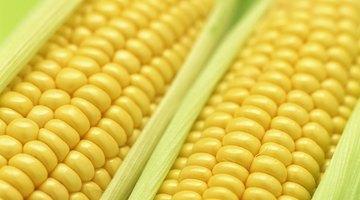 Síntomas de la alergia al maíz
