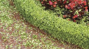 The foliage of the begonia creates textural contrast.