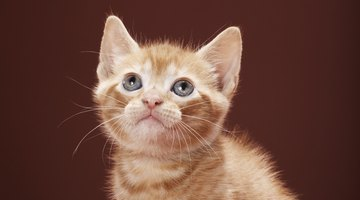 Cats and kittens living wild are not free, they are in danger and in need of rescue.