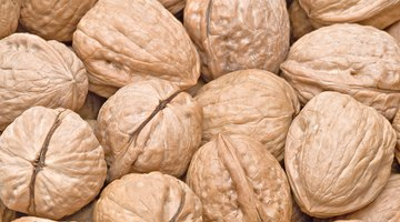 English Walnuts vs. Black Walnuts