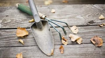 Short-handled tools allow you to get in between closely spaced plants.