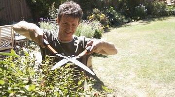 Identify unusual growths of vegetation.