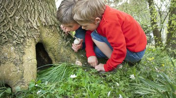 Brother With Hands Over His Face Playing Hide and Seek With His Sister in a Garden