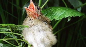 Enterre seu pássaro de estimação da forma adequada