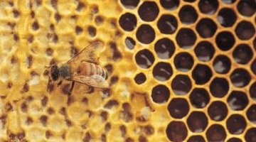 Honeycombs are more damaging to roofs than wasp nests.