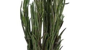 Use fresh or dried rosemary leaves in recipes.