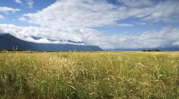 Grass is the base of most landscapes.