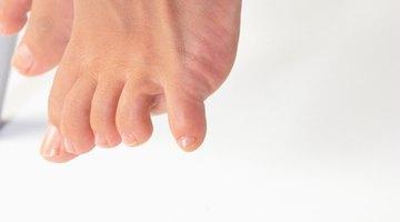 ¿Cuáles son las funciones de los ligamentos, tendones y cartílagos?
