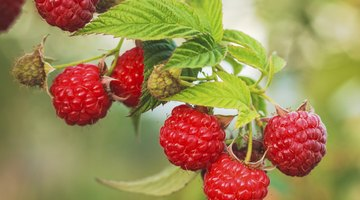 What Vitamins Are in Raspberries?