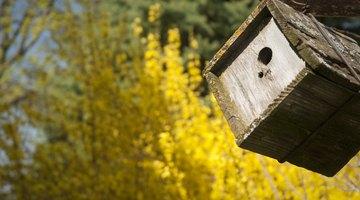 A cedar wren house is hanging from a tree.