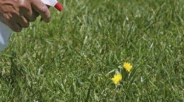 Spraying weeds.