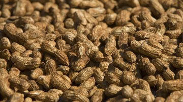 Nutrition Information for Ground Nuts
