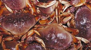 Caranguejos morrem rapidamente com água fervendo