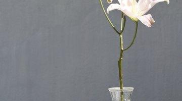 Single flower in vase