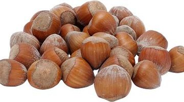 Hazelnuts are also called filberts.