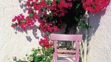 Bougainvillea adds colour and privacy.