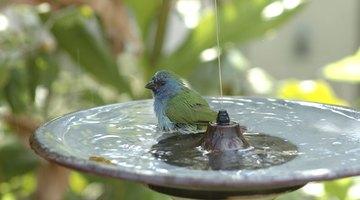 A bird is taking advantage of a bird bath.
