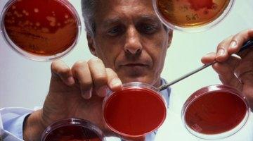 Lista de bacterias encapsuladas