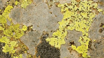 Mildew thrives in warm, damp environments.