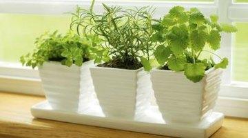 House plants in window