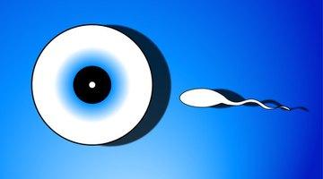 Baby's eye