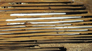 Carpenter ant galleries in structural lumber.